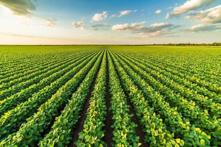 Naics Code 11111 Soybean Farming