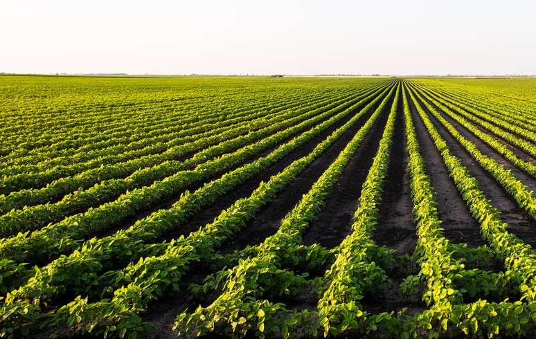 Naics Code 111110 Soybean Farming