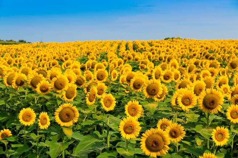 NAICS Code 111120 - Oilseed (except Soybean) Farming