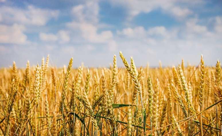 NAICS Code 11114 - Wheat Farming