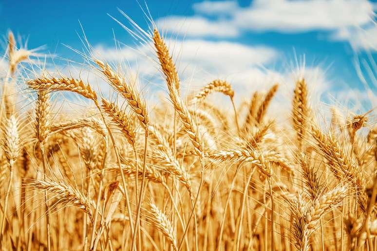 NAICS Code 111140 - Wheat Farming Example