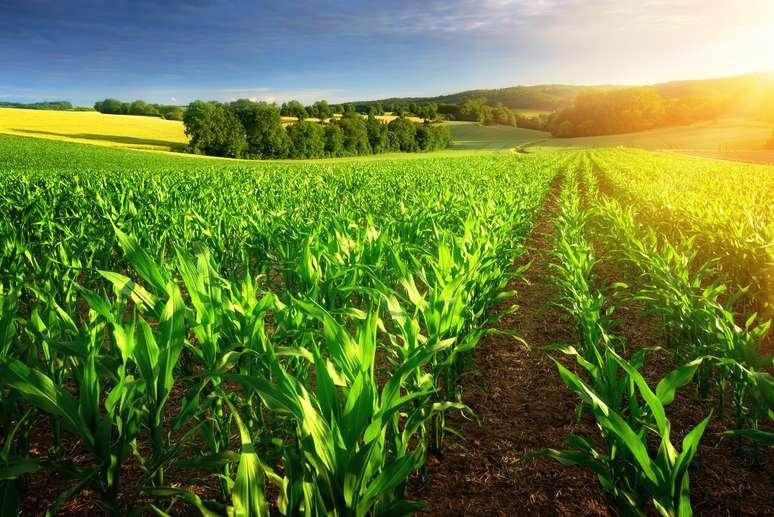 NAICS Code 11115 - Corn Farming