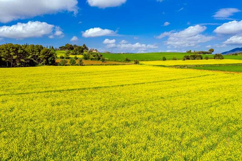 NAICS Code 11119 - Other Grain Farming