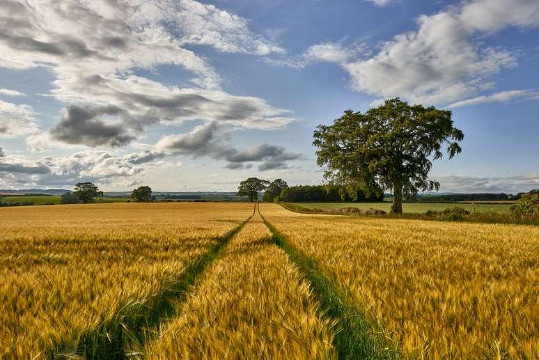 NAICS Code 111199 - All Other Grain Farming