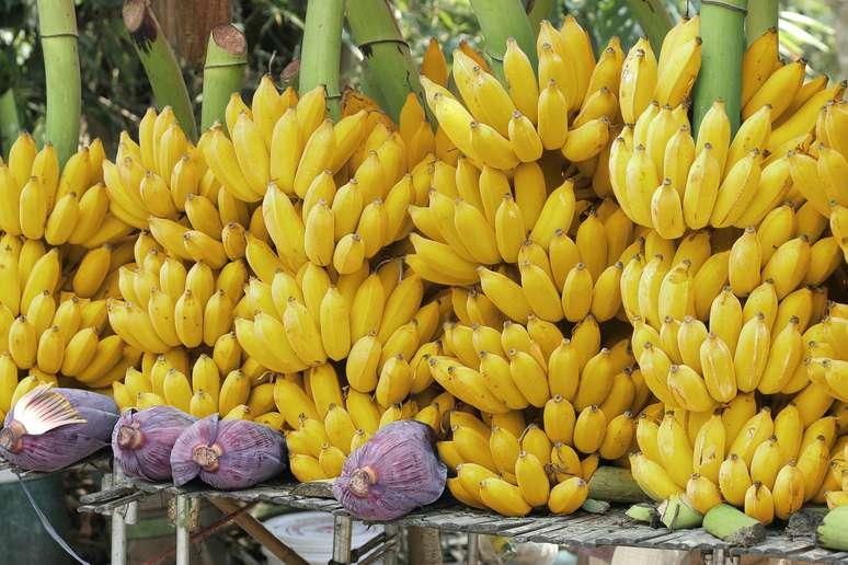 NAICS Code 1113 - Fruit and Tree Nut Farming Example