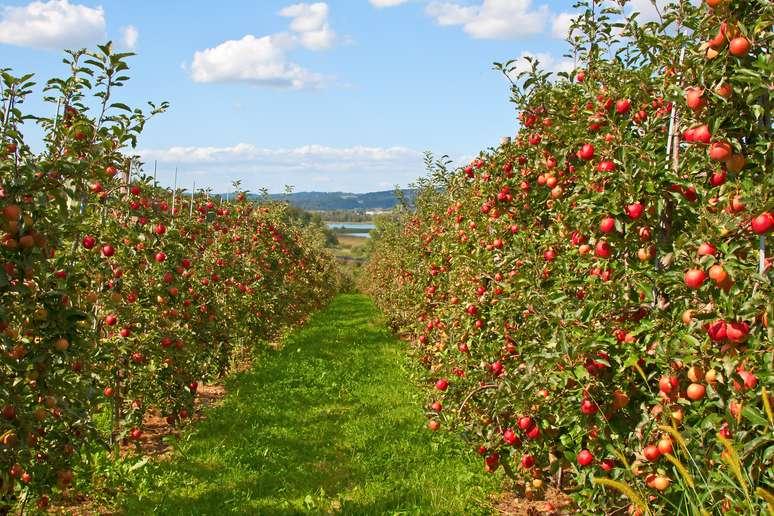 NAICS Code 111331 - Apple Orchards