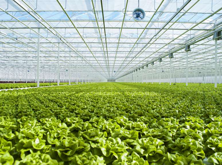 NAICS Code 1114 - Greenhouse, Nursery, and Floriculture Production