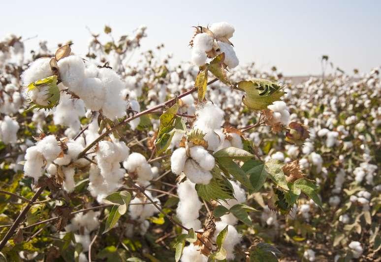 NAICS Code 111920 - Cotton Farming