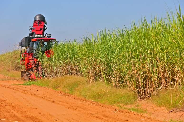 NAICS Code 111930 - Sugarcane Farming