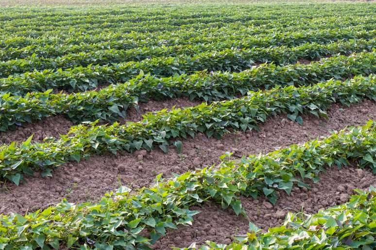 Naics Code 111940 Hay Farming