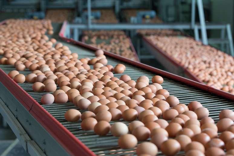 NAICS Code 112310 - Chicken Egg Production