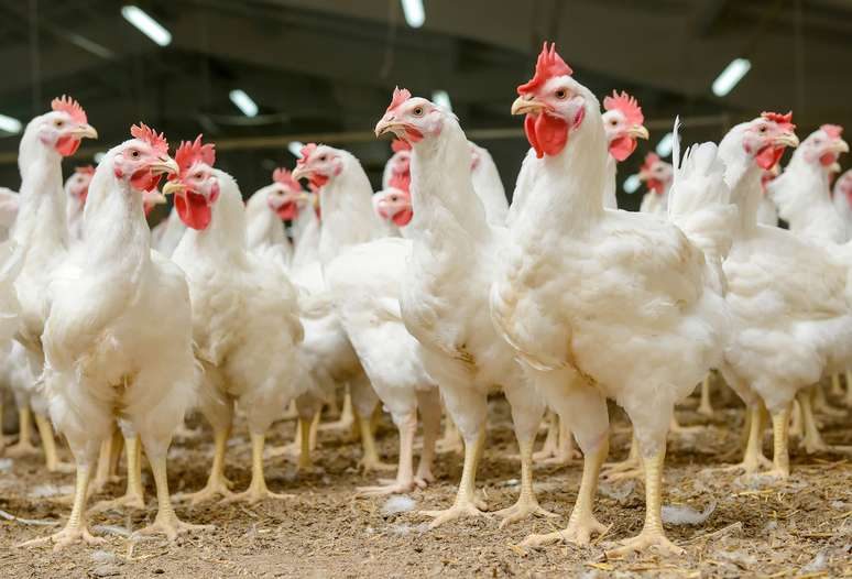 NAICS Code 112320 - Broilers and Other Meat Type Chicken Production