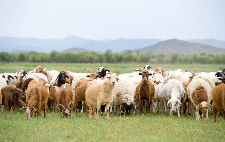 NAICS Code 112420 - Goat Farming