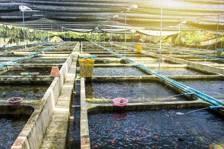 NAICS Code 112511 - Finfish Farming and Fish Hatcheries  Example