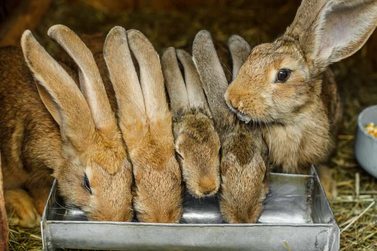 NAICS Code 112930 - Fur-Bearing Animal and Rabbit Production