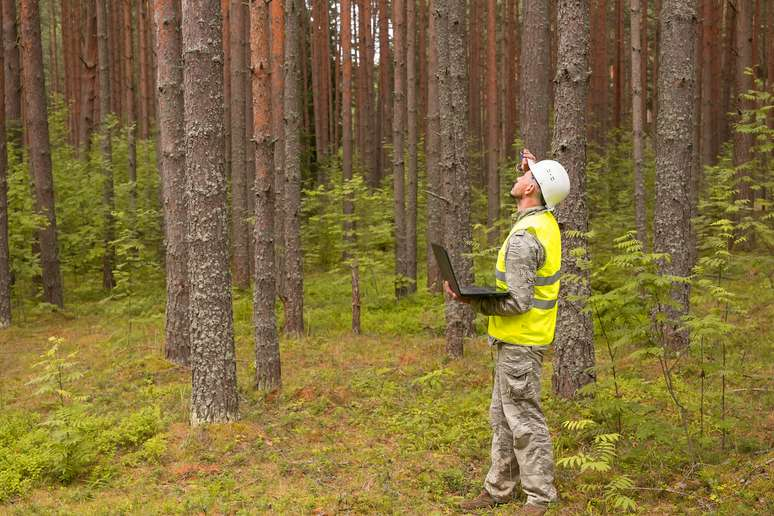 NAICS Code 115310 - Support Activities for Forestry