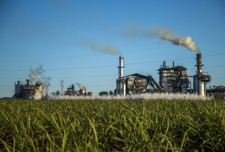 NAICS Code 311314 - Cane Sugar Manufacturing