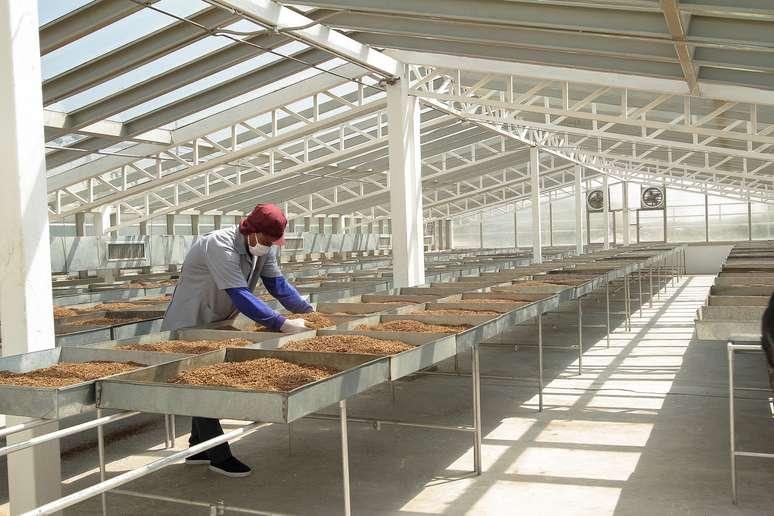 NAICS Code 31223 - Tobacco Manufacturing