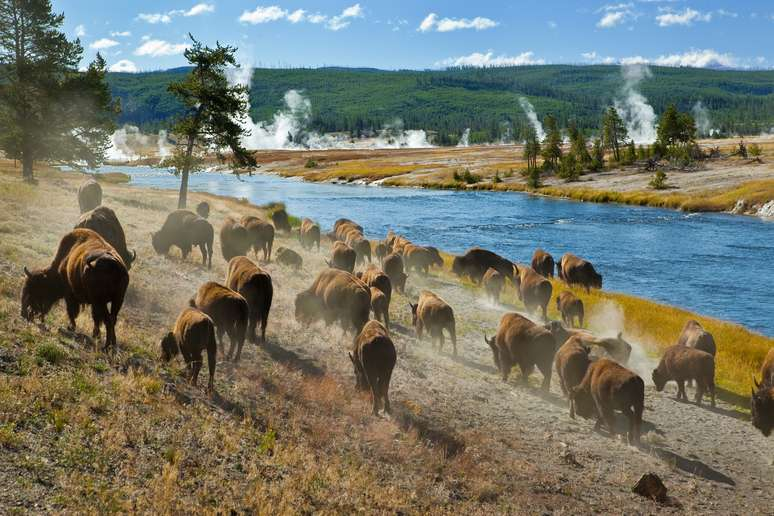 NAICS Code 924120 - Administration of Conservation Programs