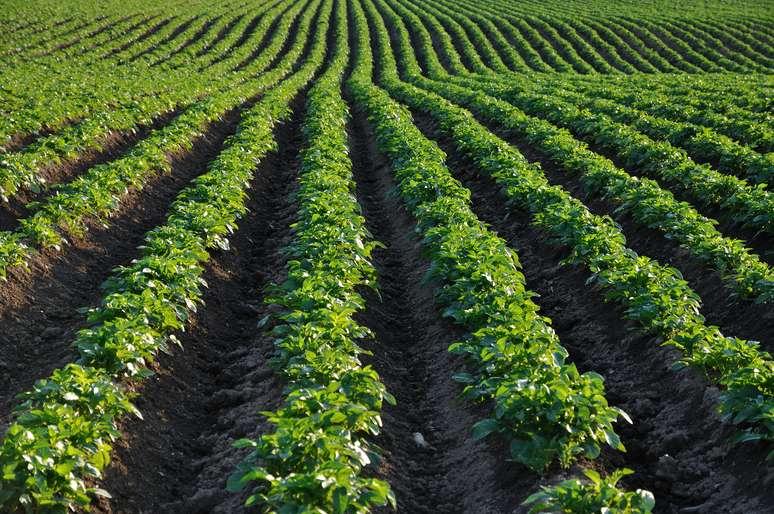 SIC Code 013 - Field Crops, except Cash Grains