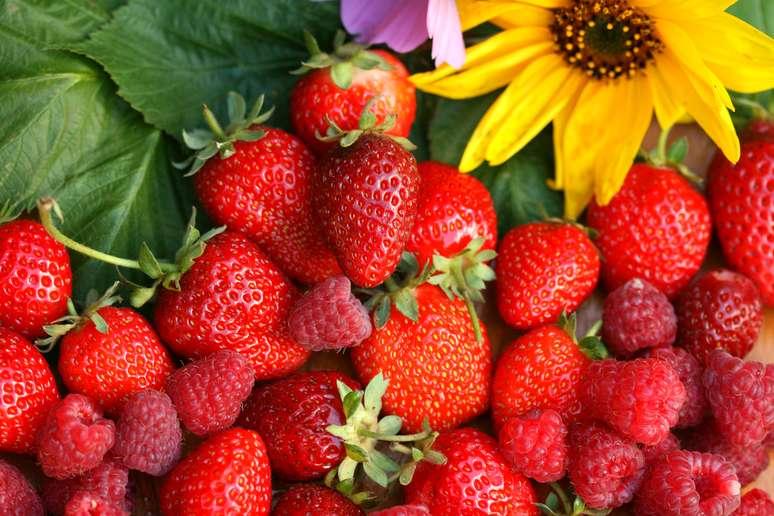 SIC Code 0171 - Berry Crops