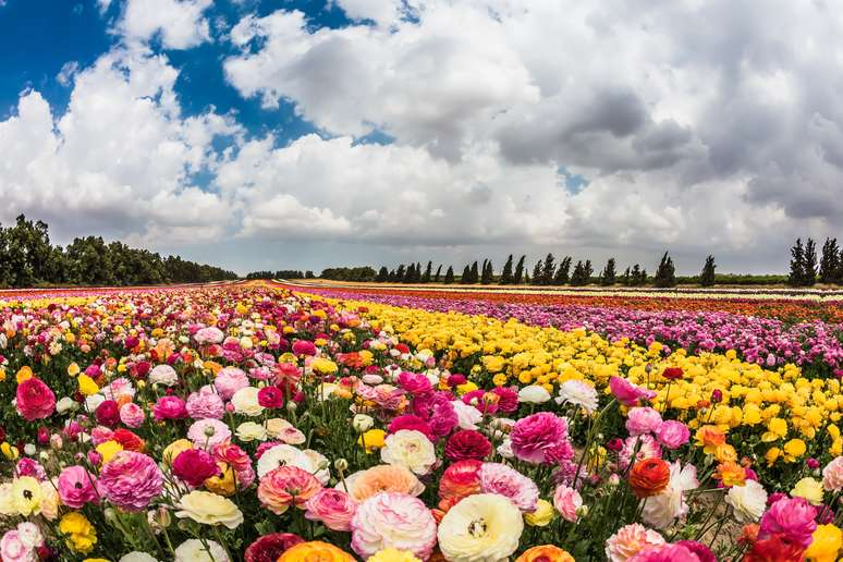 SIC Code 0181 - Ornamental Floriculture and Nursery Products Example