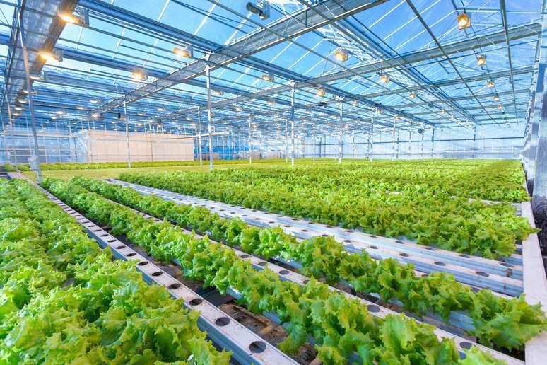 SIC Code 0182 - Food Crops Grown Under Cover