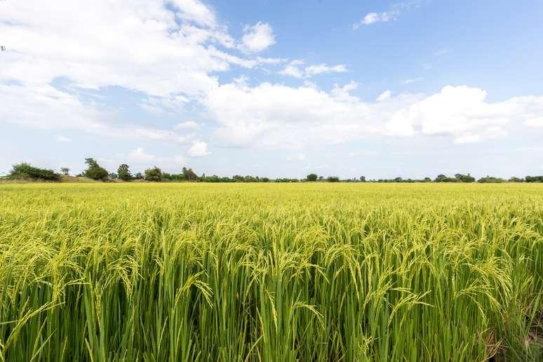 SIC Code 019 - General Farms, Primarily Crop