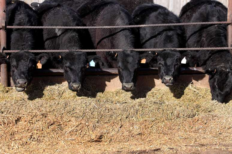 SIC Code 0211 - Beef Cattle Feedlots