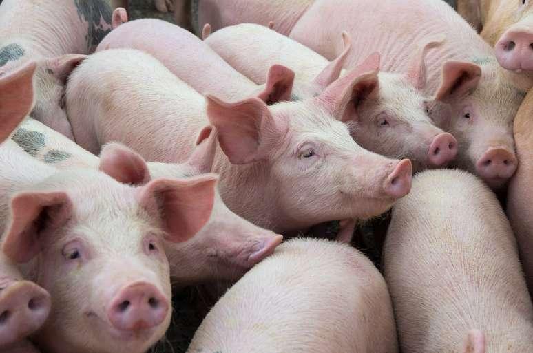 SIC Code 0213 - Hogs