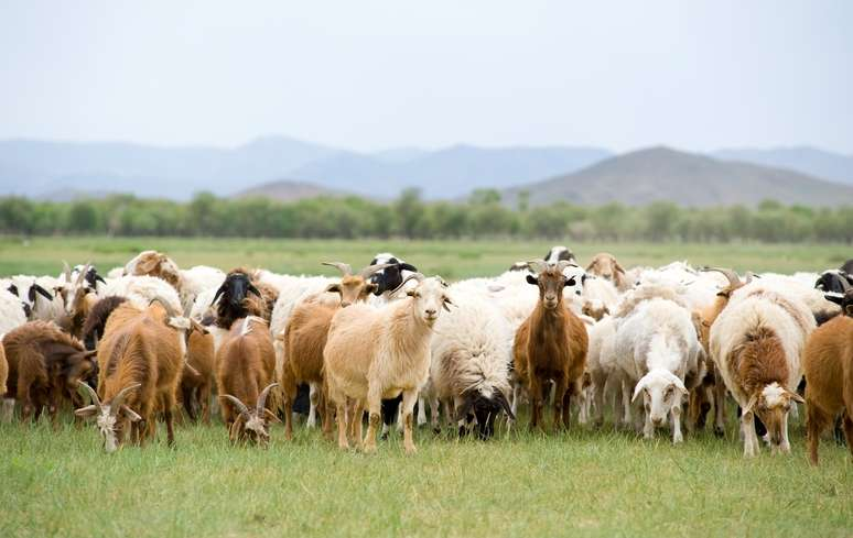 SIC Code 0214 - Sheep and Goats Example