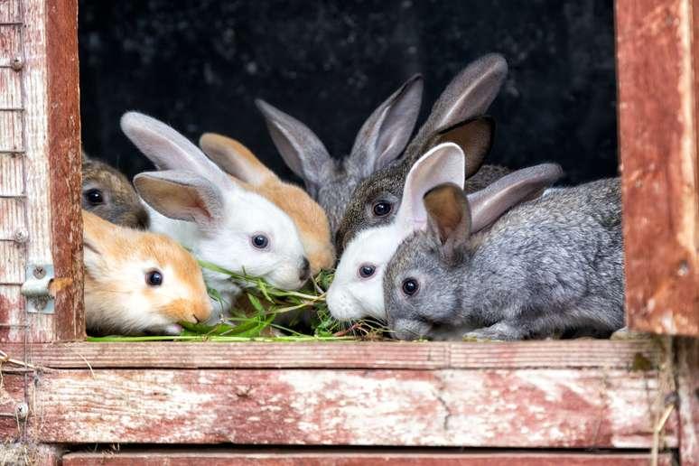 SIC Code 027 - Animal Specialties