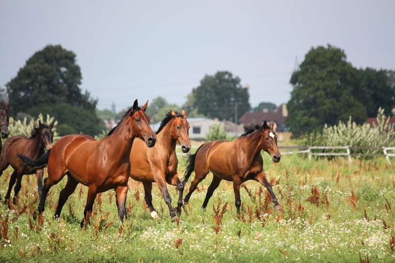 SIC Code 0272 - Horses and Other Equines