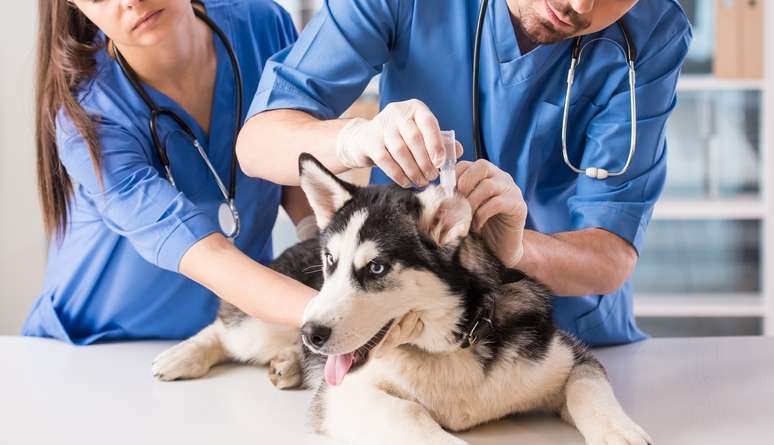 SIC Code 074 - Veterinary Services