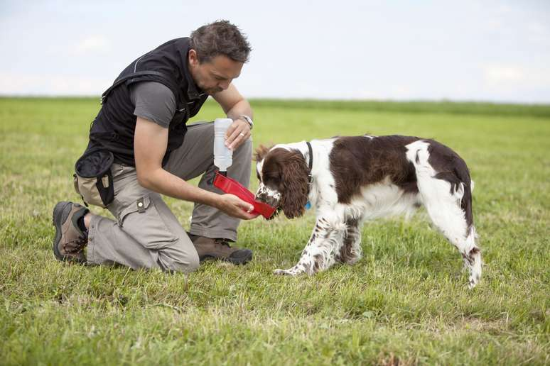 SIC Code 0752 - Animal Specialty Services, except Veterinary