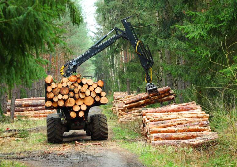 SIC Code 081 - Timber Tracts