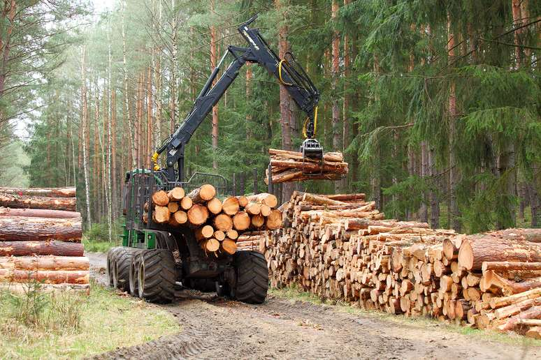 SIC Code 0811 - Timber Tracts
