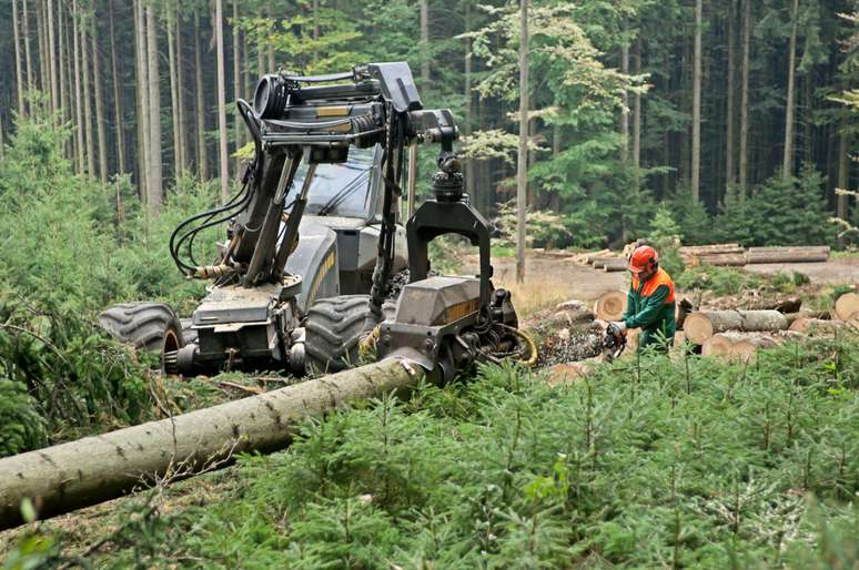 SIC Code 085 - Forestry Services