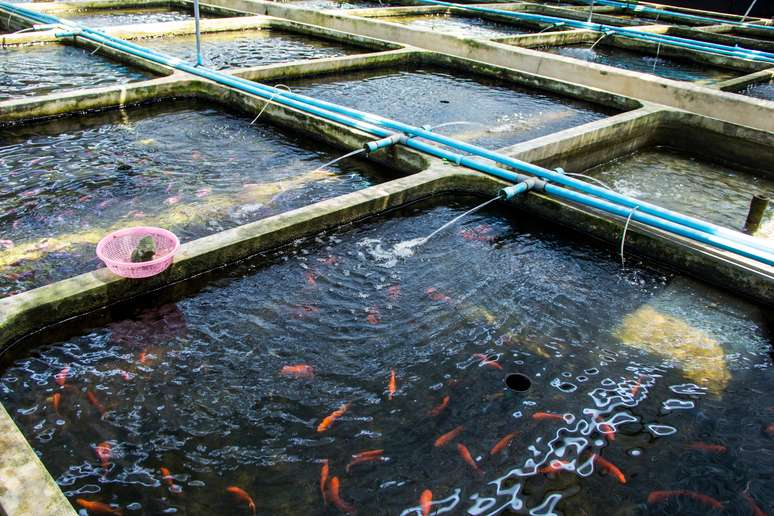SIC Code 092 - Fish Hatcheries and Preserves