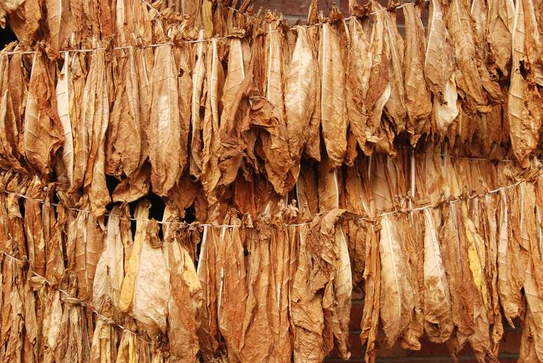 SIC Code 2141 - Tobacco Stemming and Redrying