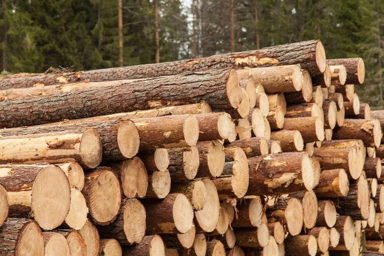 SIC Code 241 - Logging