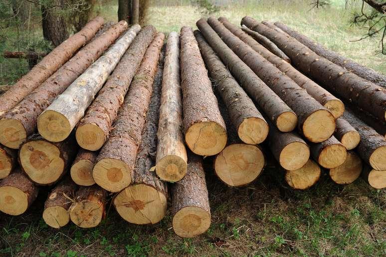 SIC Code 2411 - Logging