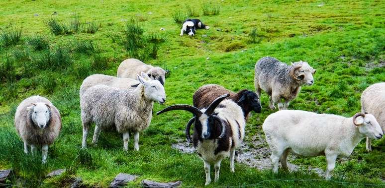 SIC Code 5154 - Livestock